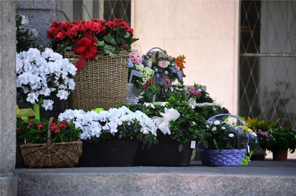 Florist Interlaken